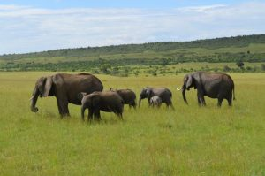 camping-coast-kenya-safaris