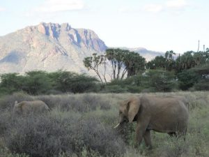 elephants-at-shaba-coast-camping
