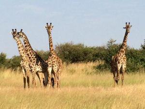 giraffe-coast-camping