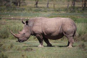 white-rhino-coastcamping